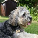 Paws R Us profile image.
