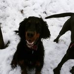 Big Licks Dog Walking profile image.