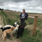 Outward Hounds Dog Walking & Pet Sitting profile image.