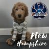 New Hampshire Dog Trainers: Off Leash K9 Training profile image