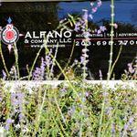 Alfano & Company, LLC profile image.