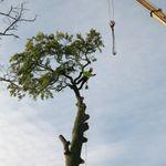 Trim a Tree profile image.