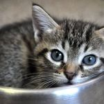 Cheshire Stay at home pets profile image.
