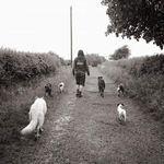 Walker's Canine Behaviour & Training profile image.