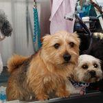 Wigston Dog Groomers profile image.