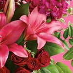 Dragonetti Brothers Florist & Garden Center profile image.