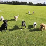Dogbliss Dog Daycare and Dog Walk profile image.