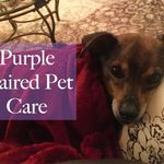 Purple Haired Pet Care profile image.