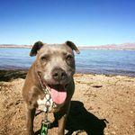 Lake Havasu Dog Walking Company profile image.