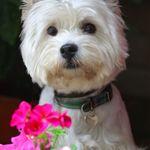 WhataPhoto Ltd profile image.