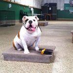K9 Basics Dog Training profile image.