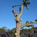 N Vaughan Tree Services profile image.