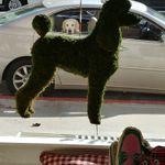 Onblonde Pet Spa & Boutique profile image.