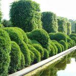 I Want Plants // I Want Trees profile image.