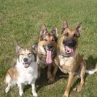 Cosford Dog training