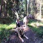 Elite Pet Care Ltd profile image.