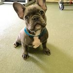 Green Dog Training profile image.