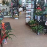 Alfa Flower Shop profile image.