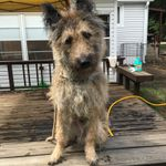 Sit Means Sit Dog Training - South Chicagoland profile image.