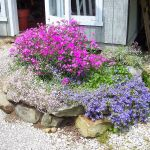 Auburn Pointe Greenhouse profile image.
