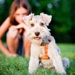 Dog Training 360 profile image.