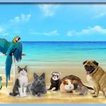 Pet Sitter Brighton profile image.