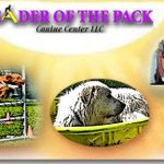 Leader of the Pack Canine Center LLC profile image.