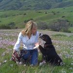 Furry Paws Puppy & Dog Training -  Service Dog Training and Certification profile image.