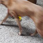 canine cruisers  profile image.