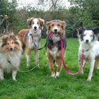 Karen's Dog Walking & Pet Services