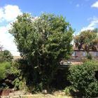 Carringtons Tree Surgery and Landscapes
