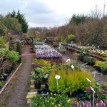 Craddocks Nurseries profile image.