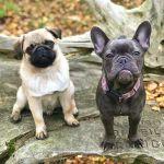 Reebas Pet Retreat Doggie Day Care profile image.