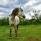 Elswick Equestrian Centre