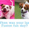 Fusion Pet Retreat profile image