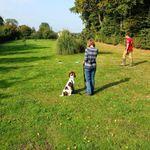 Pupstarz dog training profile image.