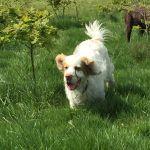 Paws Dog Walking Services profile image.