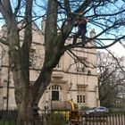 Tipi Tree Care