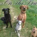 Dogs on the downs profile image.