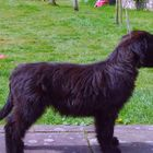 Be Good Dog Training - West Malling
