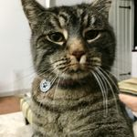 Moggy Meows  profile image.