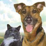 Against The Grain Pet Nutrition profile image.