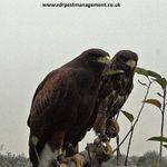 RDR Pest Management profile image.