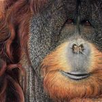 Chumleys Art & Illustration profile image.