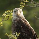 Eagle Eye Photography - David Lipsy profile image.