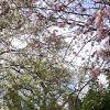 Blossom Gardens profile image