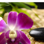 Green Pastures Still Waters Massage Therapy & Spa profile image.