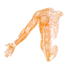 DW Osteopathy profile image