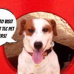 TLC Pet Care Centers profile image.