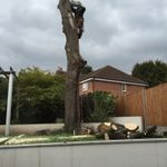 Treetops tree surgeons profile image.